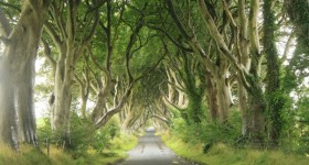 darkhedges