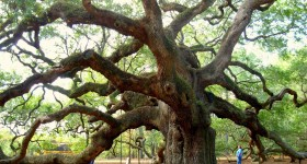 angel-oak-charleston