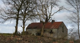 cooneen-cottage-revealed-after-felling